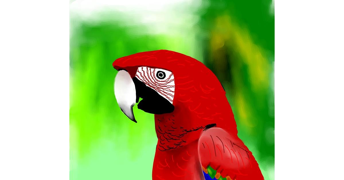 Parrot drawing by Joze