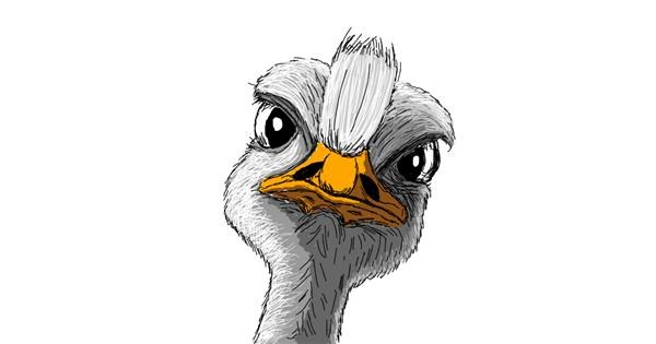 Ostrich drawing by Chartos