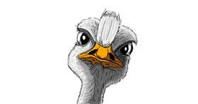 Drawing of Ostrich by Chartos