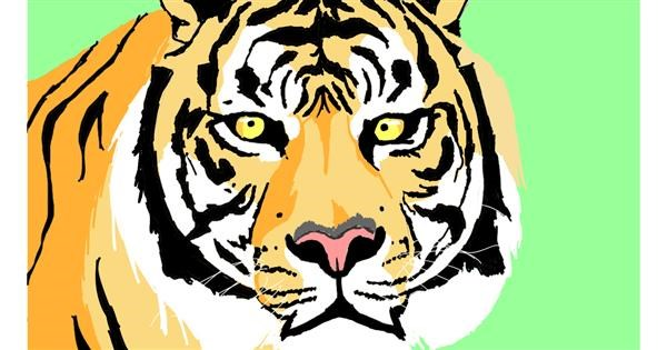 Tiger drawing by Sam
