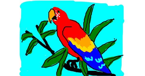 Parrot drawing by Anonymous