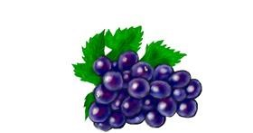 Drawing of Grapes by Humo de copal