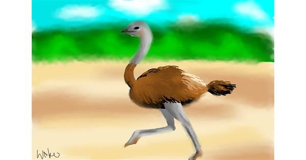 Ostrich drawing by not a native