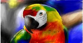 Drawing of Parrot by Soaring Sunshine