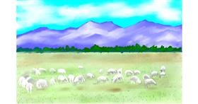 Sheep drawing by GJP