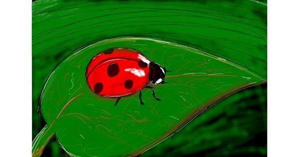 Ladybug drawing by Tami
