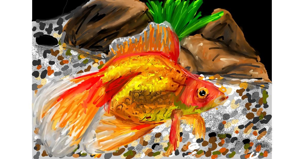 Goldfish drawing by Soaring Sunshine