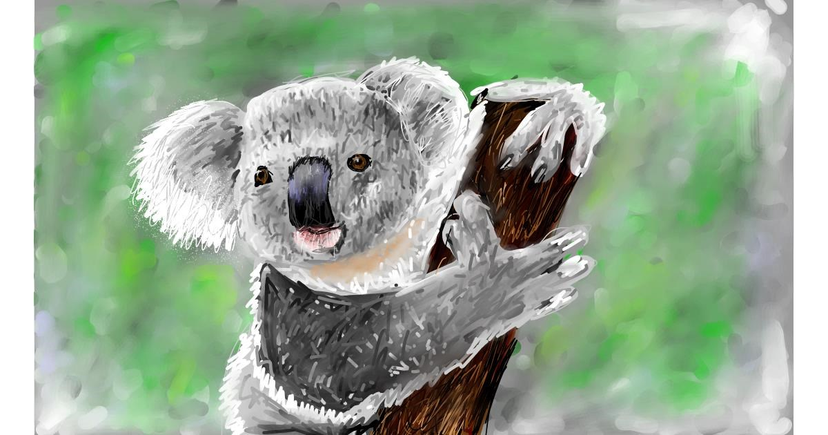 Drawing of Koala by Soaring Sunshine
