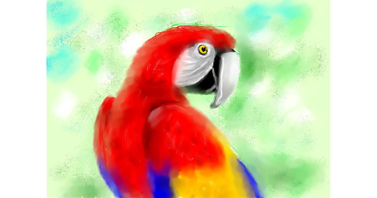 Parrot drawing by 🌈SunShine🐴🌻