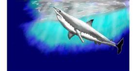 Shark drawing by SAM AKA MARGARET 🙄