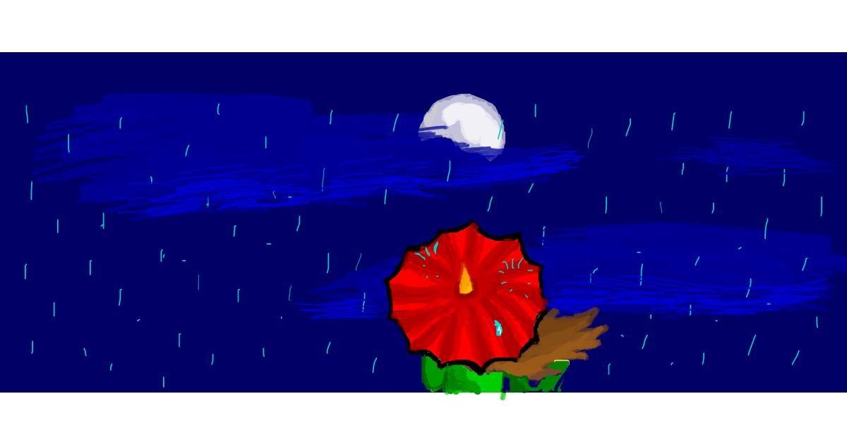 Umbrella drawing by coconut