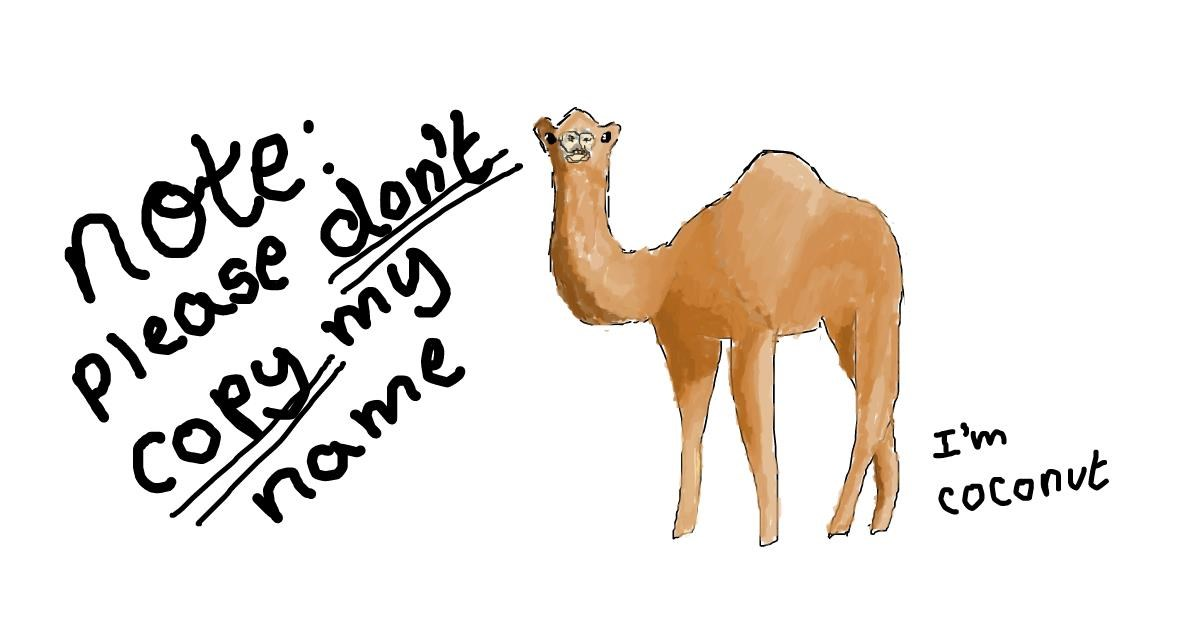 Drawing of Camel by coconut