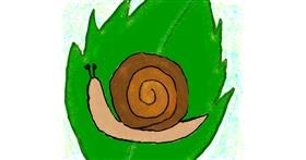 Snail drawing by Lsk