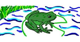 Frog drawing by Rosa