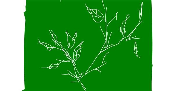 Leaf drawing by So