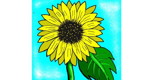 Sunflower drawing by Loves