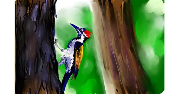 Woodpecker drawing by Rose rocket