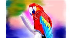 Parrot drawing by GJP