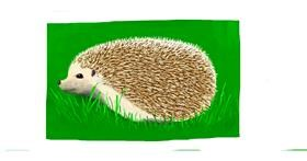 Hedgehog drawing by Pinky