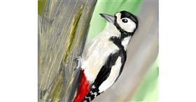 Woodpecker drawing by Muni
