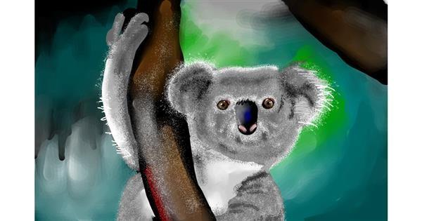 Koala drawing by Rose rocket