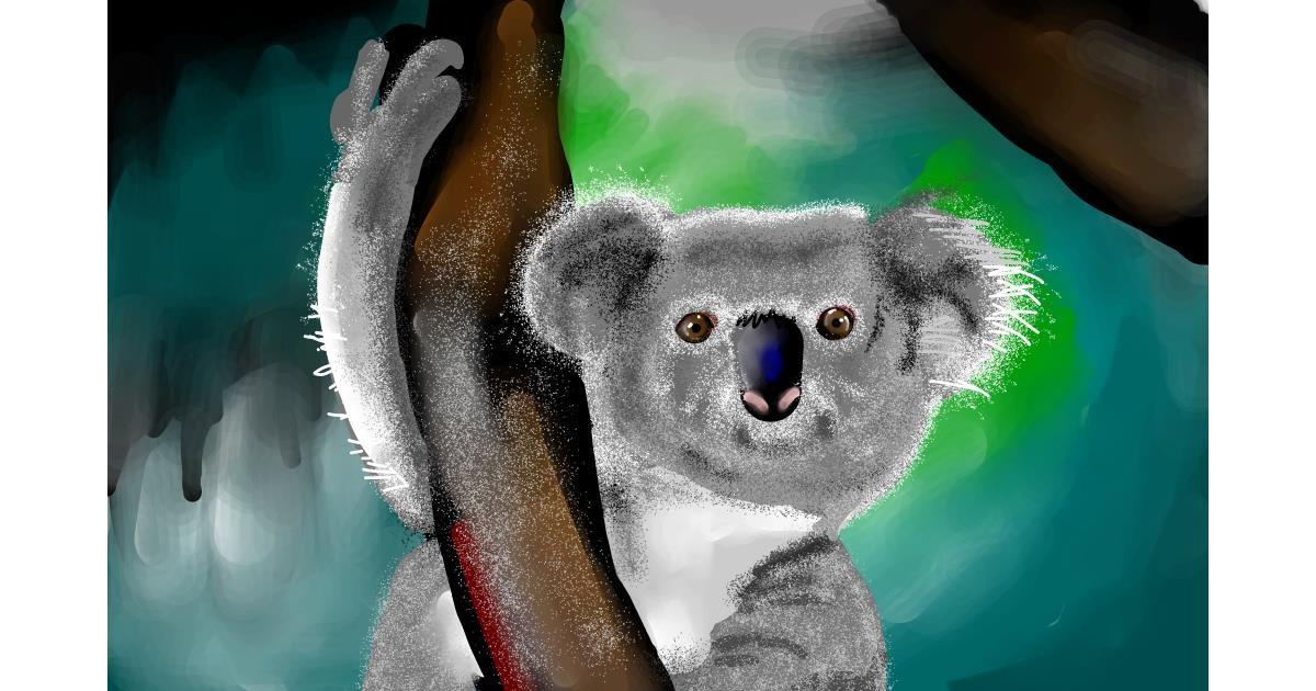Drawing of Koala by Rose rocket