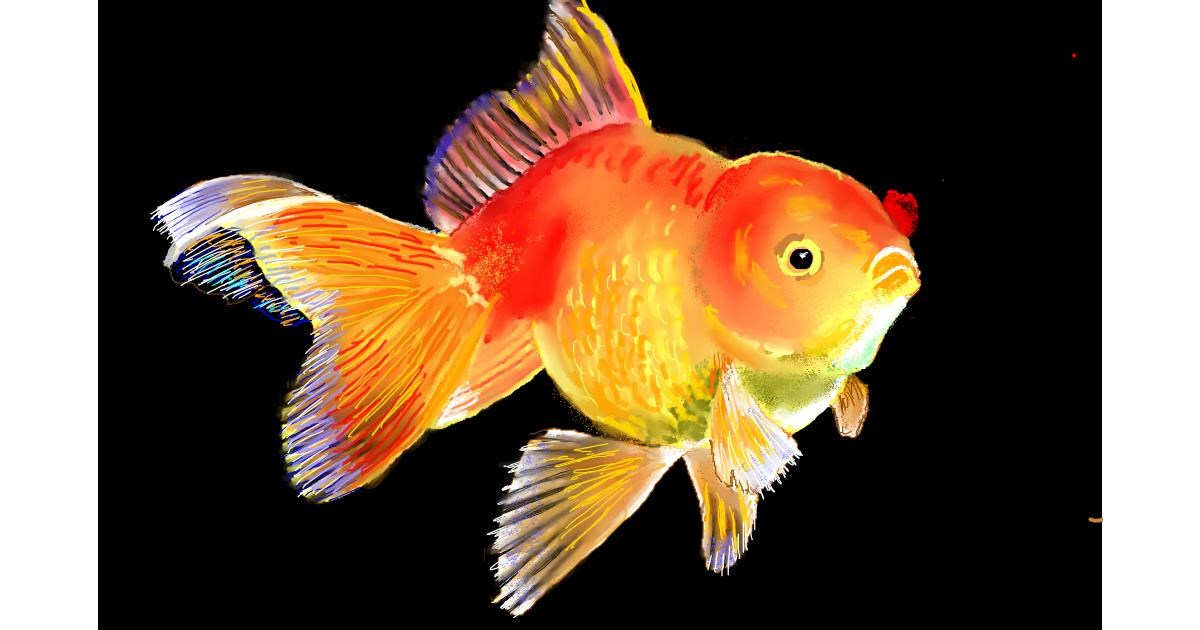 Drawing of Goldfish by GJP