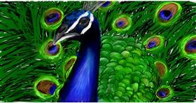 Drawing of Peacock by Soaring Sunshine