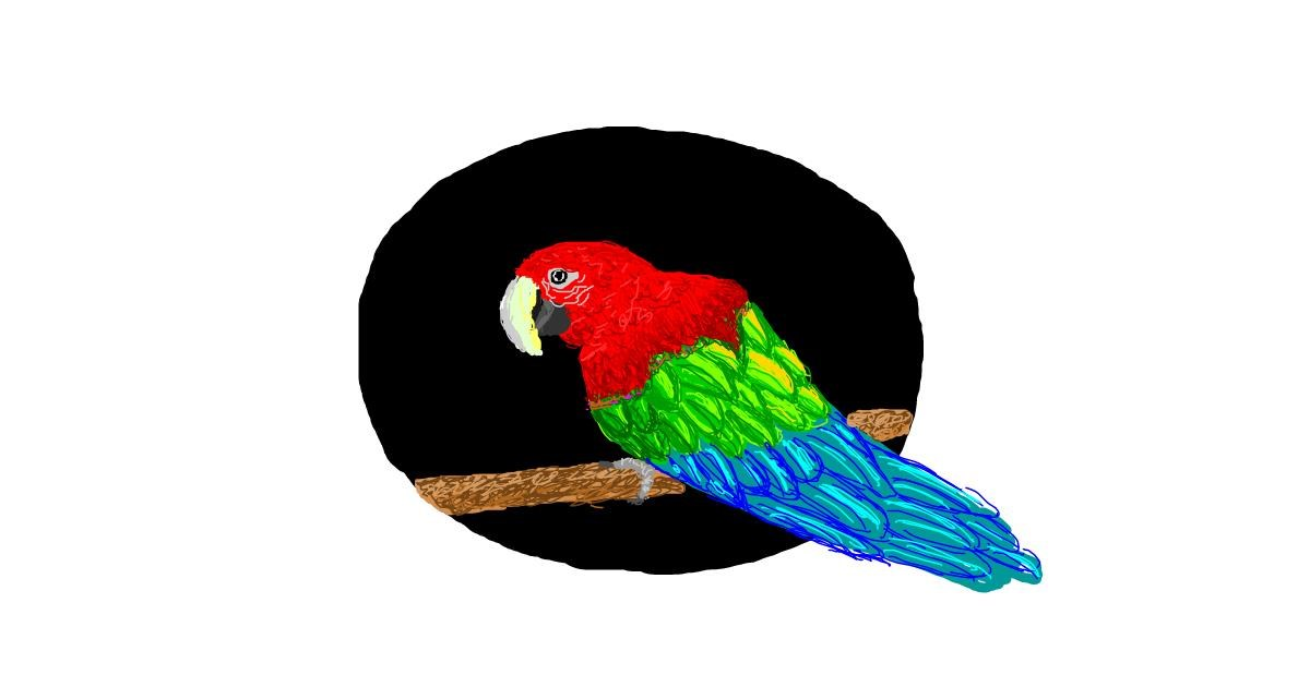 Parrot drawing by Nugget