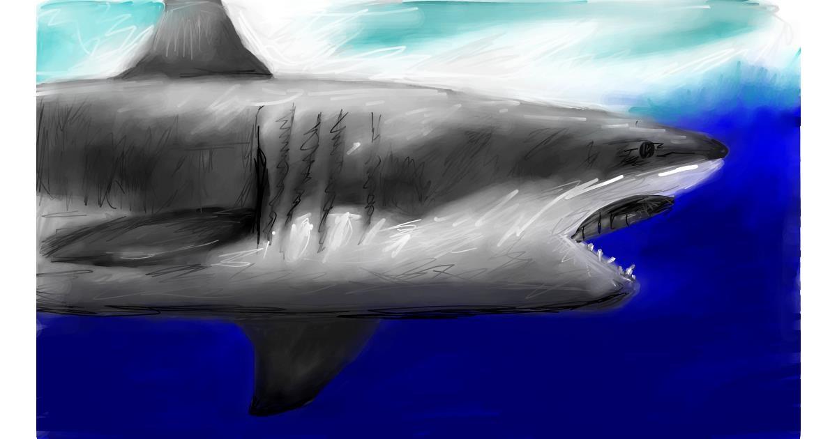 Shark drawing by Soaring Sunshine