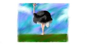 Drawing of Ostrich by Sara