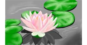 Drawing of Water lily by Tim