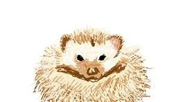 Hedgehog drawing by Rayn Solchain