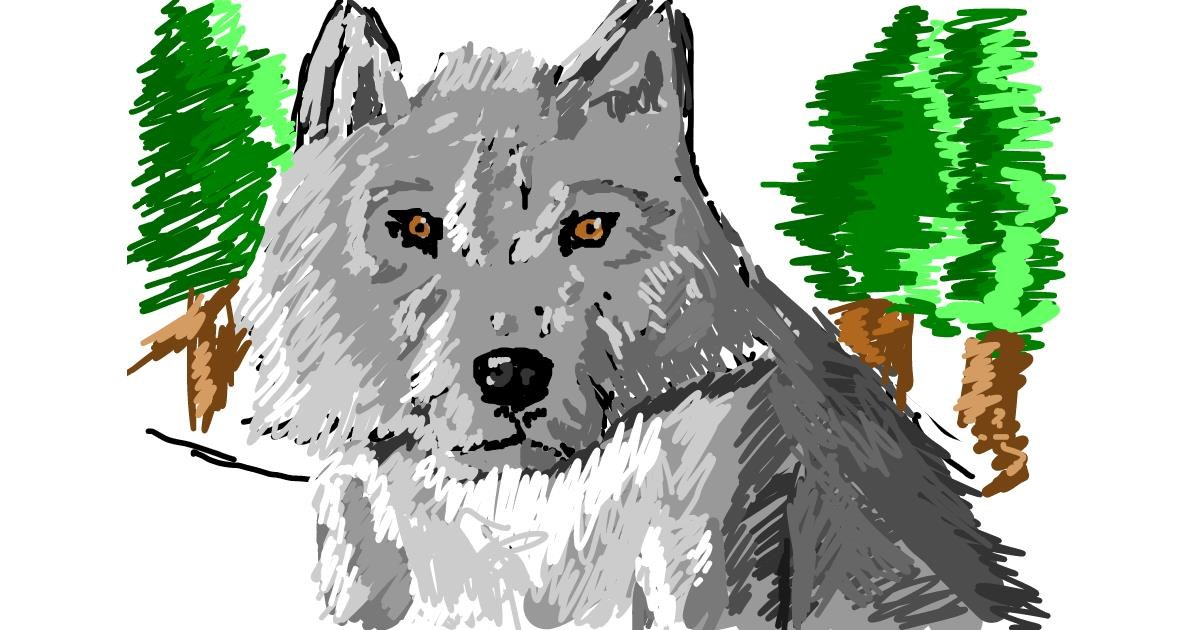 Wolf drawing by Tony
