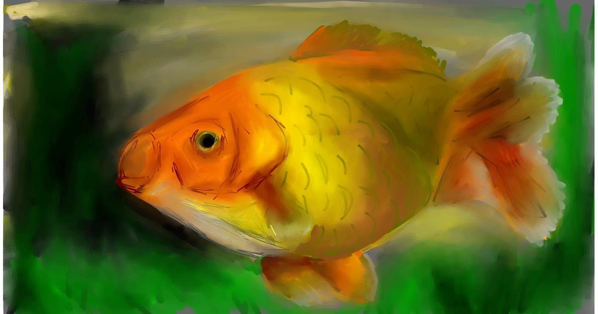 Drawing of Goldfish by Soaring Sunshine