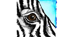 Zebra drawing by Dettale