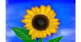 Drawing of Sunflower by Zara