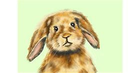 Rabbit drawing by Bicho