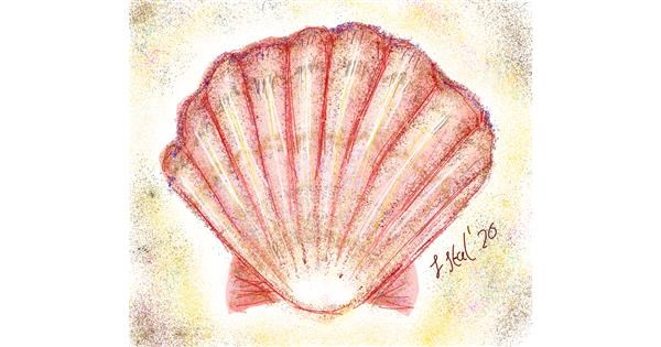 Seashell drawing by Iris