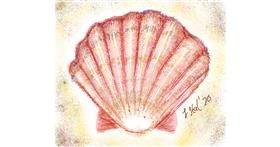 Seashell drawing by Iris