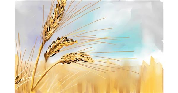 Wheat drawing by Rose