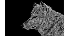 Drawing of Wolf by Humo de copal