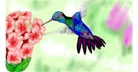 Drawing of Hummingbird by SAM AKA MARGARET 🙄