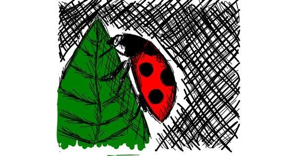 Ladybug drawing by Feli