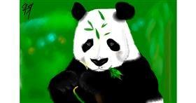 Drawing of Panda by Bibattole