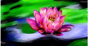 Drawing of Water lily by Soaring Sunshine
