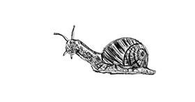 Snail drawing by smiley
