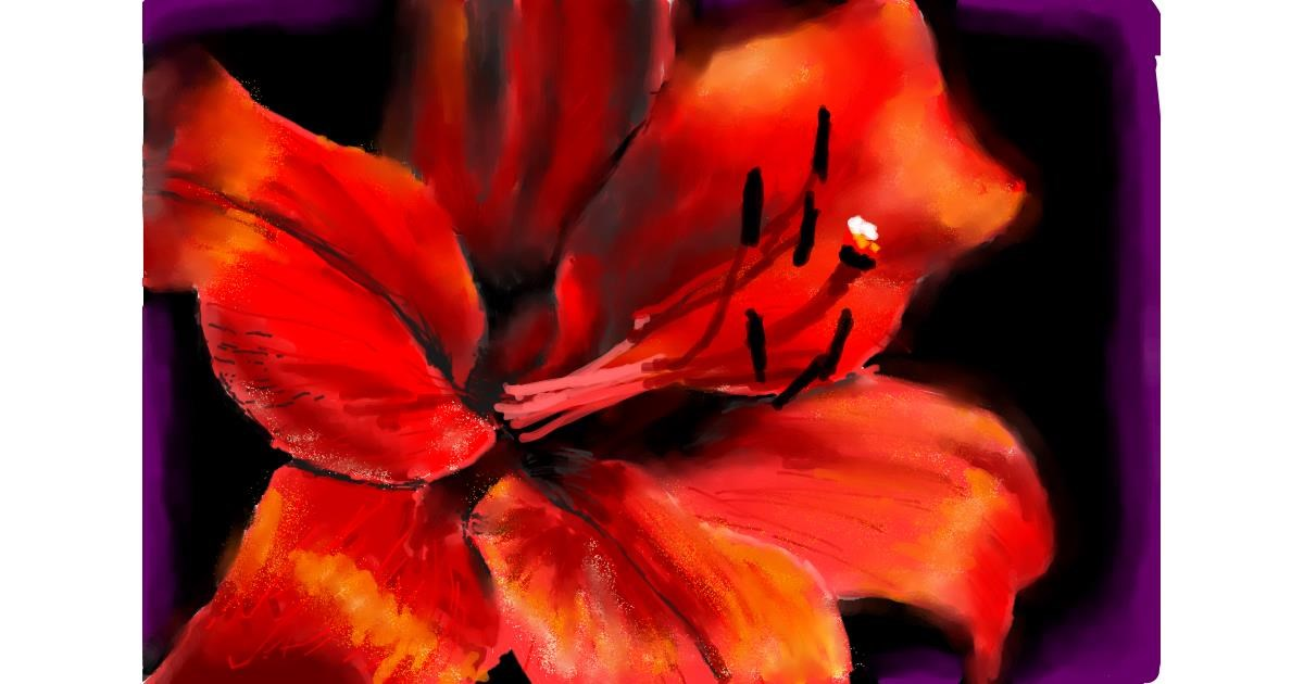 Lily flower drawing by teidolo