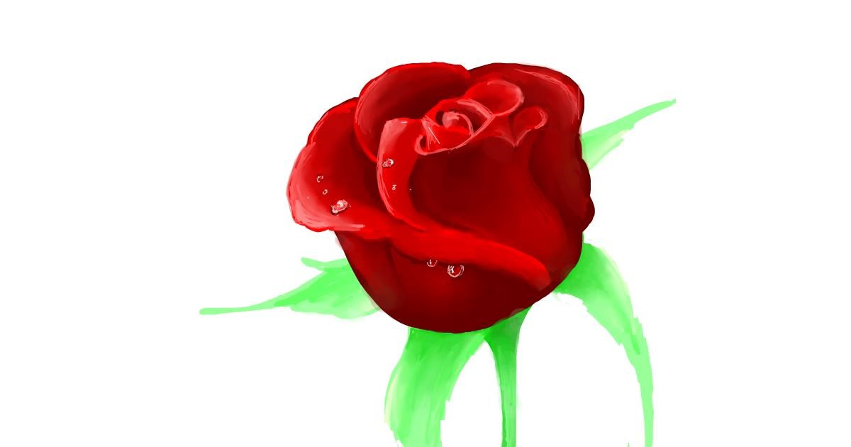 Rose drawing by Scott