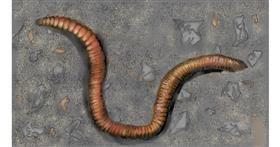 Worm drawing by SAM AKA MARGARET 🙄